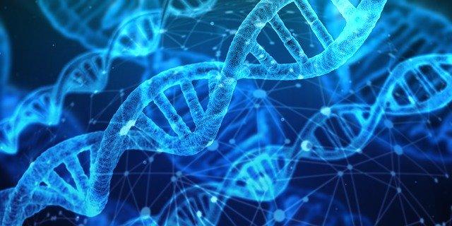 Lidské DNA